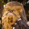 35 Chewbacca Gifts for the--Rawwwwr!