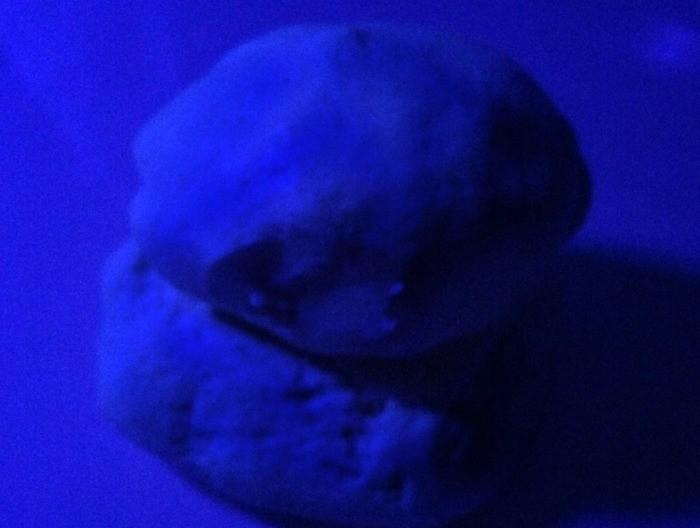 play dough that glows in the dark random