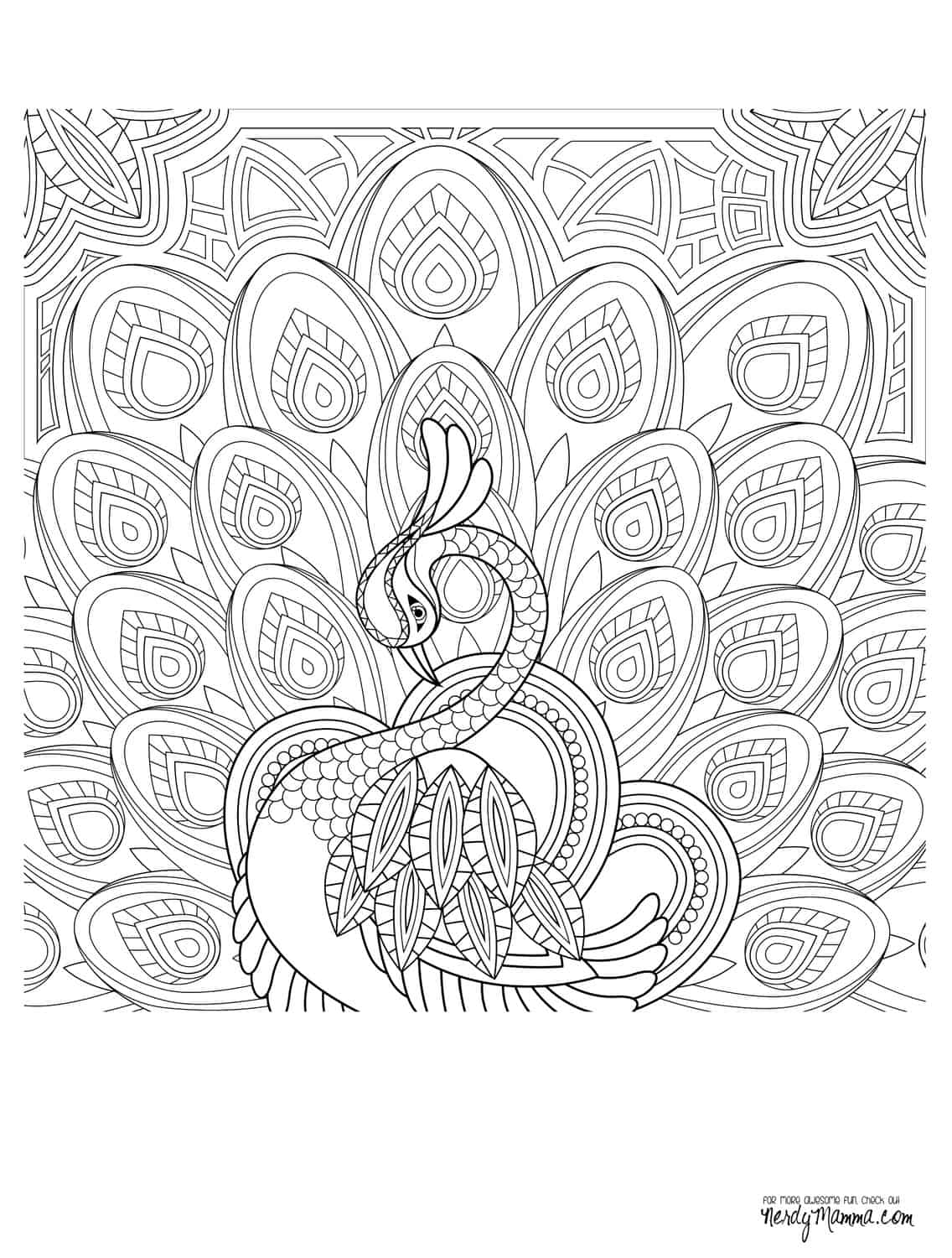 Coloring Pages Of Birds For Adults | 1500x1136
