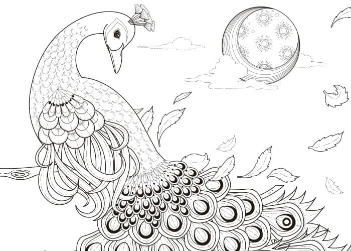 final peacock coloring page 2 pic