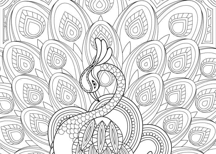 final peacock coloring page pic