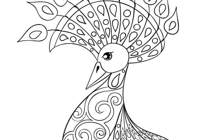 peacock coloring page for adults small