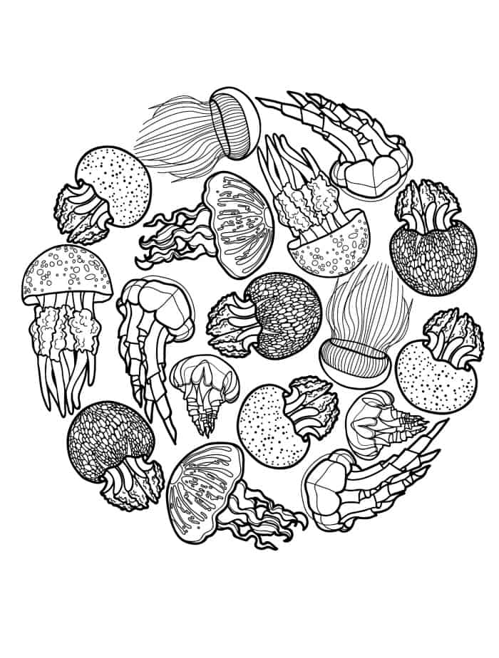 free downloadable adult coloring page with jellyfish pic