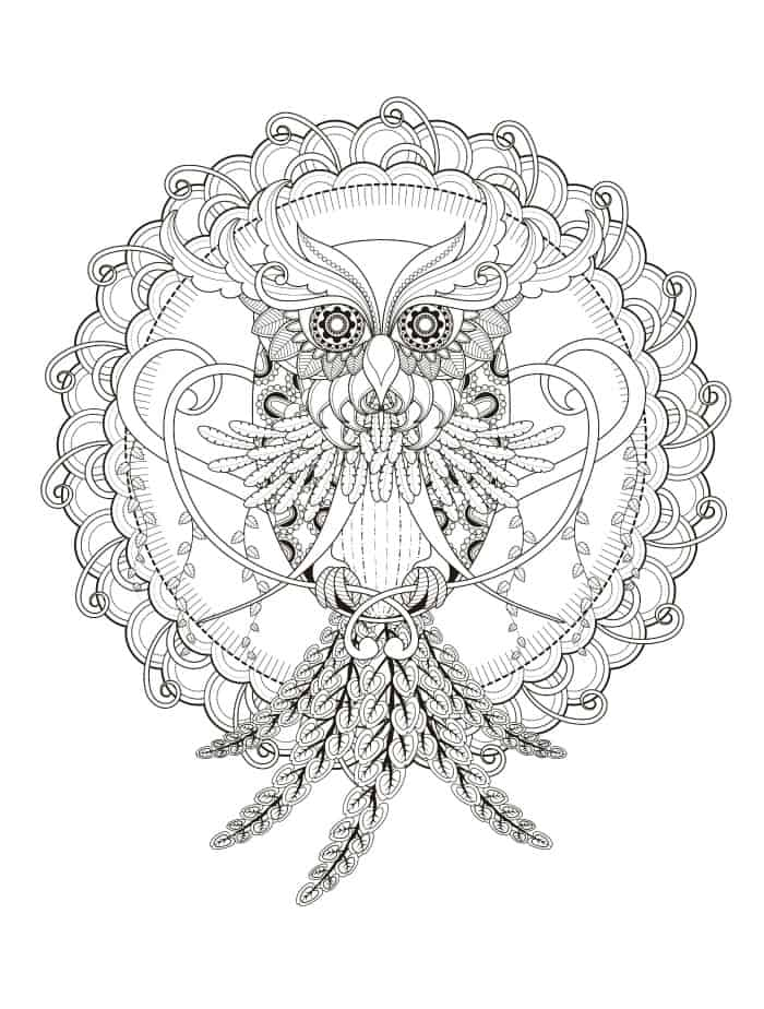 owl coloring page for adults pic