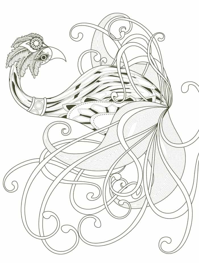 bird adult coloring page free print
