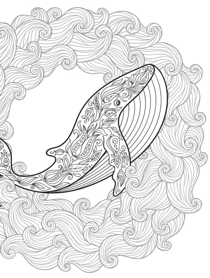 whale adult coloring page for free printing