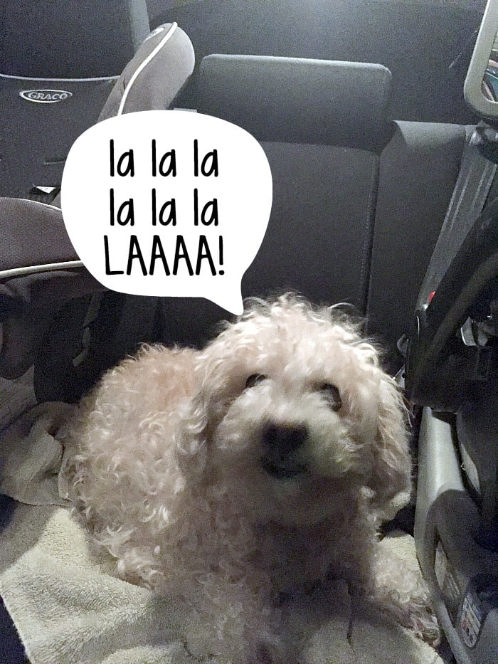 how to keep your sanity while traveling with a loud dog ra