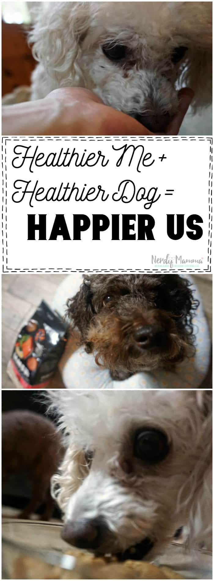 I love this great free printable checklist for helping get healthier with your dog!