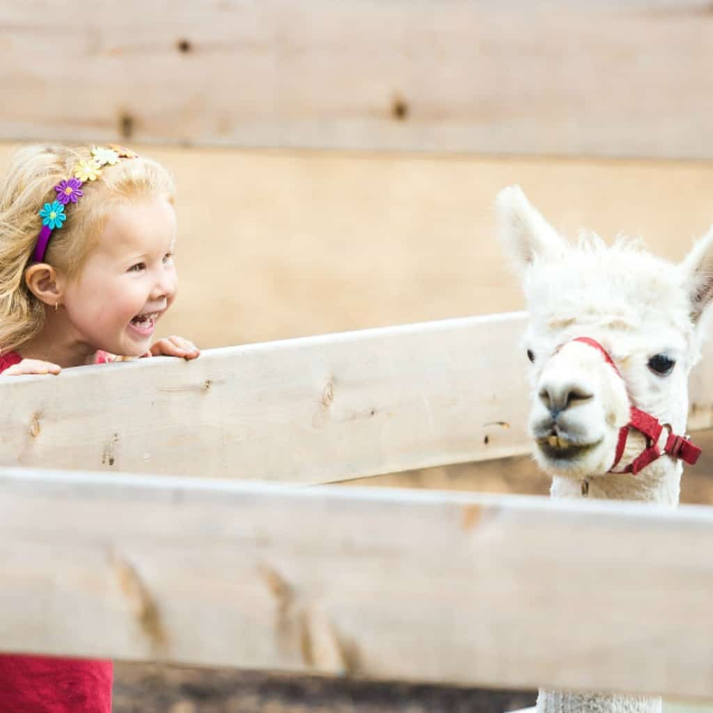 what you need for a trip to the zoo with toddlers