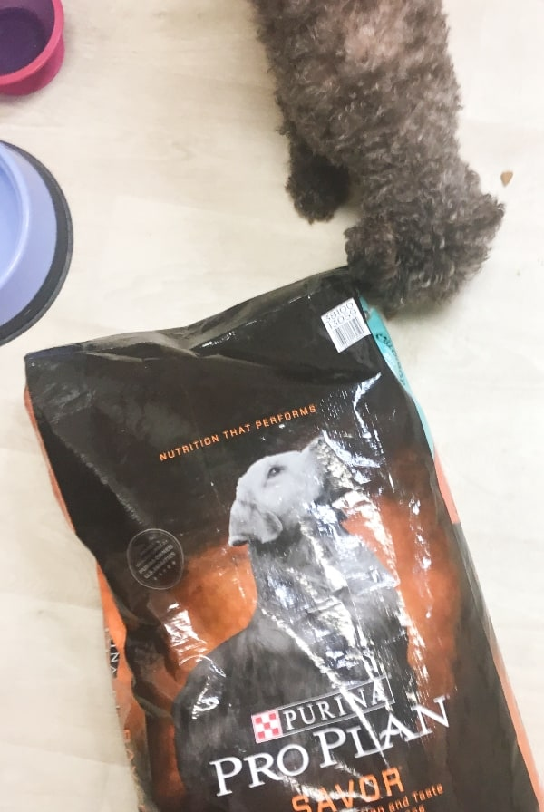 #ad I recently had a tipping point where I realized my dog needs a little something extra to Help My Older Dog Be Happy. #nerdymammablog #proplanprobiotic #CollectiveBias